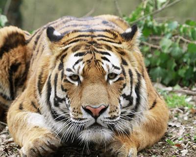 Eine Reise ins exotische Tierreich