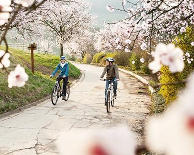 Radfahren an der südlichen Weinstraße